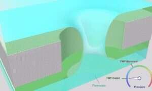 Filtry membranowe inspirowane naturą