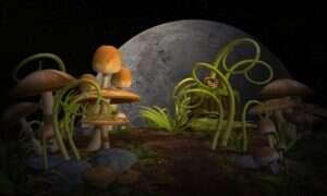 Małe dawki halucynogennych grzybków zwiększają kreatywność