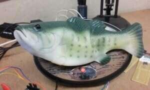 Deweloper tchnął życie w gumową rybę… asystentką Alexa