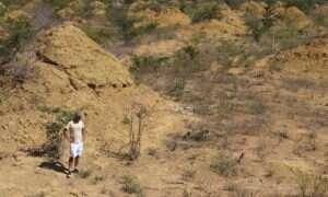 Te kopce termitów zobaczycie z kosmosu