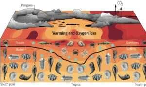 Wysokie temperatury spowodowały wymarcie 96% morskich organizmów