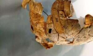 Prawdopodobnie ten mężczyzna ok. 8000 lat temu został rytualnie spalony