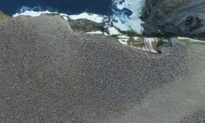 1,5-milionowa kolonia pingwinów ukrywała się przez prawie  3000 lat na tych wyspach