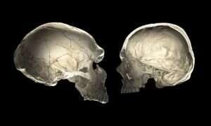 Kształt naszej czaszki pomoże określić, czy posiadamy DNA neandertalczyków