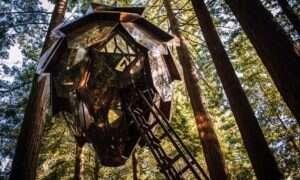Ten domek na drzewie zapewni Wam niesamowite widoki