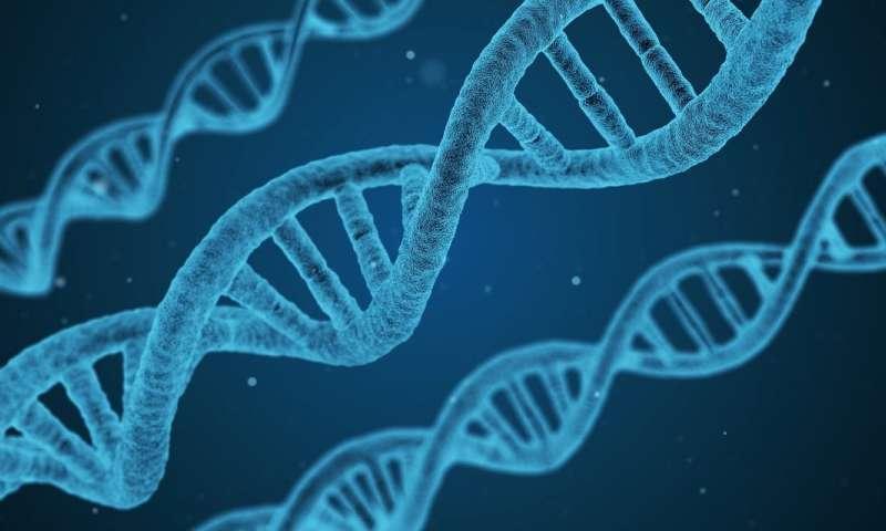 genetyka, kształt ciała, kształt ciała genetyka, cukrzyca genetyka, zawał serca genetyka, geny