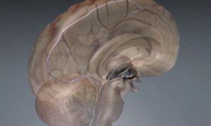 Implant stymulujący mózg z wnętrza naczynia krwionośnego