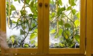 Naukowcy opracowali roślinę oczyszczającą powietrze w domu