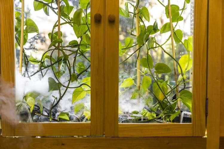 roślina, oczyszczanie powietrza, roślina oczyszczająca powietrze, bluszcz