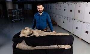 Badania sugerują, że prehistoryczne wieloryby mogły ssać pokarm