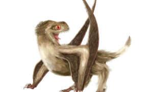 Latające gady zwane pterozaurami były pokryte piórami