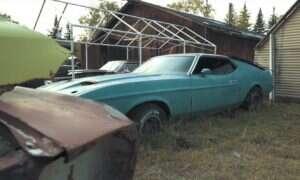Alaska okazała się skarbnicą kilkudziesięcioletnich Mustangów