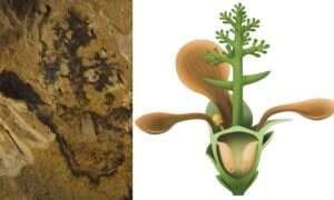 Najstarszy kwiat na Ziemi pojawił się znacznie wcześniej niż sądziliśmy