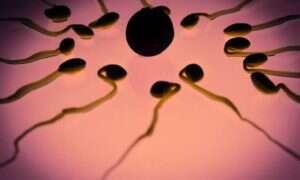 Nawracające poronienia związane są z wadliwymi plemnikami