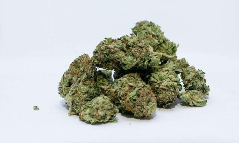 marihuana, THC, zwartość THC, uzależnienia, choroby psychiczne, europa