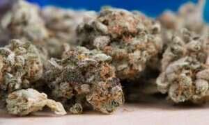 Nawet jedno zapalenie marihuany powoduje zmiany w mózgu