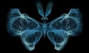 Układ odpornościowy działa zgodnie z teorią chaosu