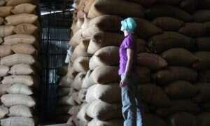 Ponad połowa gatunków kawy jest zagrożona wyginięciem