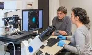 Pierwszy krok w kierunku stworzenia syntetycznych materiałów biologicznych