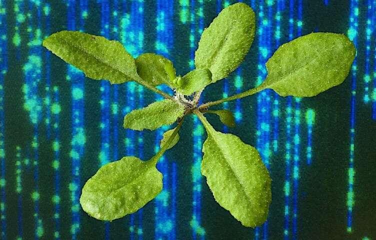genetycznie modyfikowane rośliny, modyfikacja roślin, mapowanie DNA roślin