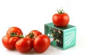 Ten kieszonkowy skaner określa świeżość produktów spożywczych