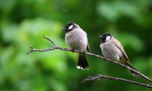 Ta kamera pokazuje w jaki sposób ptaki widzą kolory