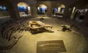 15-metrowe wieloryby żywiły się młodszymi osobnikami