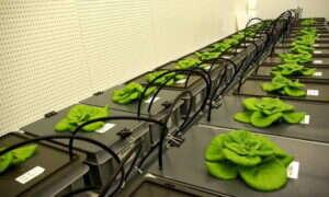 """Sztuczna """"gleba"""" umożliwia uprawę żywności w kosmosie"""