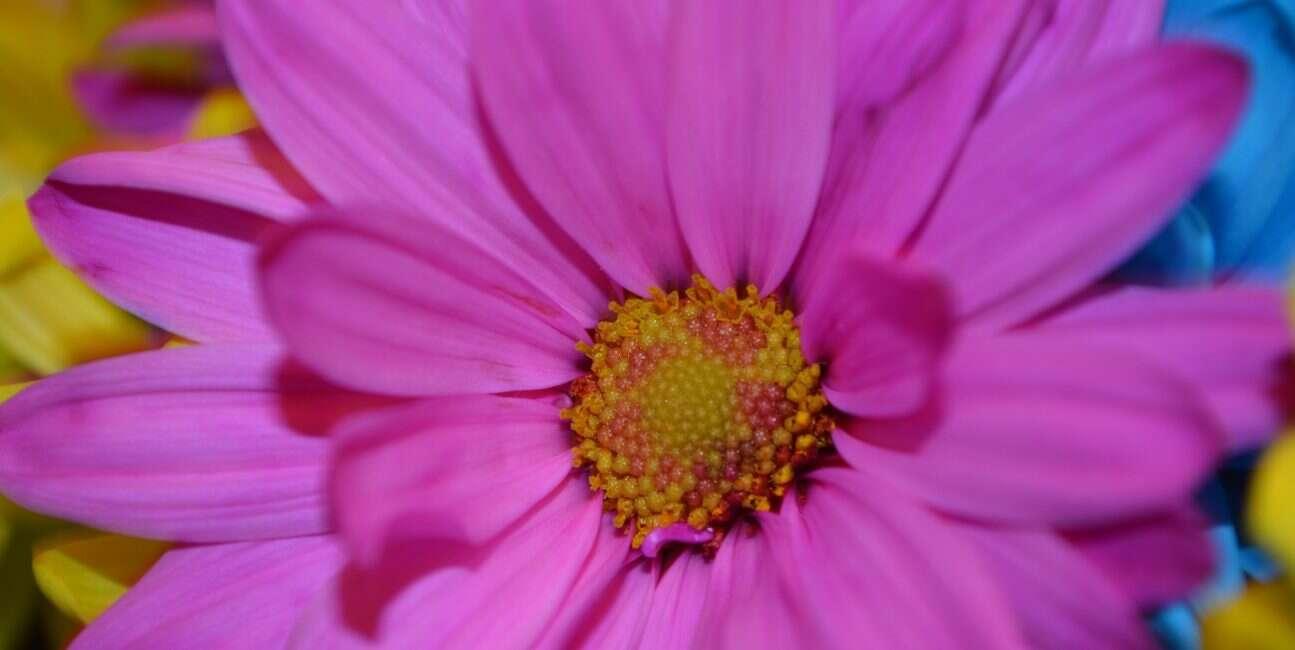 alergia, lek na alergię, mechanizm alergii