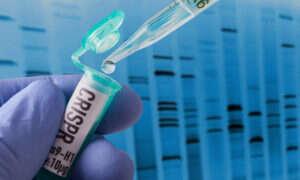 CRISPR pozwolił na uniezależnienie komórek macierzystych od układu odpornościowego