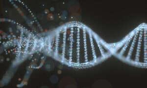 CRISPR mogło wpłynąć na mózgi bliźniąt