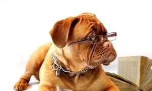 Charakter psów może ulegać zmianie w czasie