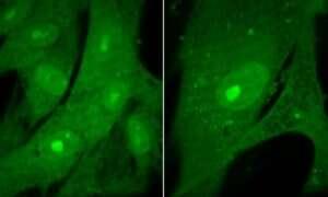Dlaczego komórki tego samego typu mają taką samą wielkość?