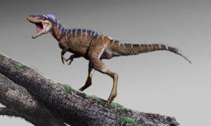 Przodek tyranozaura był mniejszy od człowieka
