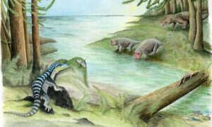 Zanim pojawiły się dinozaury, to zwierzę rządziło Antarktydą