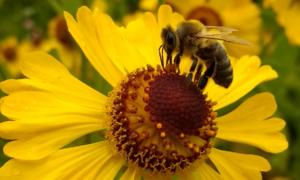 Pszczoły potrafią wykonywać proste obliczenia