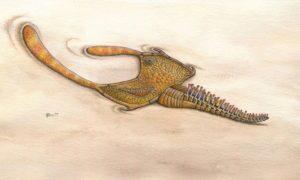 Wyjaśniła się tajemnica związana ze zwierzęciem odkrytym 150 lat temu
