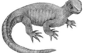 U żółwia sprzed 240 mln lat zdiagnozowano nowotwór kości