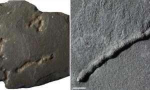 Skamielina sprzed 2,1 miliarda lat może być dowodem najwcześniejszej ruchomej formy życia