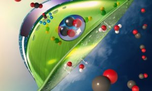 Sztuczny liść wychwytuje dwutlenek węgla z powietrza