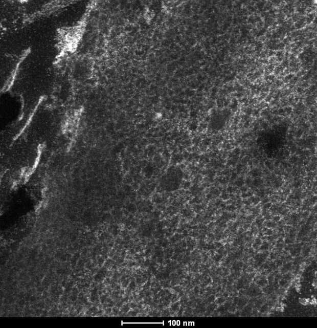 Analiza molekularna pióra teropoda może wyjaśnić pochodzenie lotu