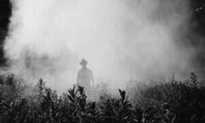 Pestycydy mogą przyspieszać rozwój ALS