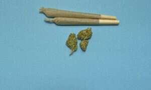 Czy marihuana rzeczywiście zwiększa ochotę na śmieciowe jedzenie?