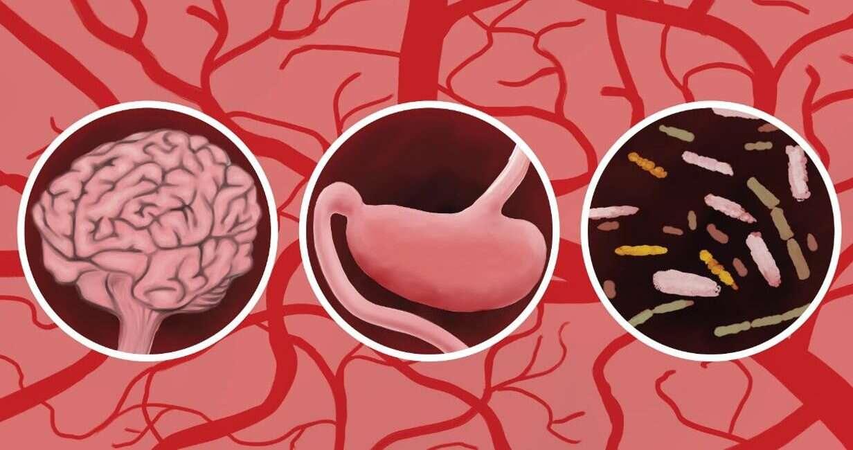 mikrobiom jelit, udar, udar jelita, udar mikrobiom jelit, udar bakterie