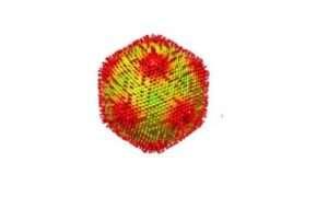 """Tajemniczy wirus zamienia ameby w """"kamień"""""""