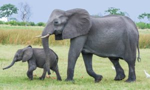 Czy zwierzęta mogą tworzyć relacje ze swoimi dziadkami?