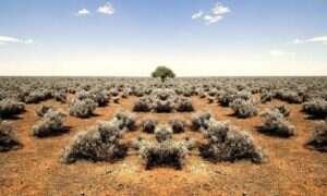 Afrykańską sawannę czeka fatalna przyszłość