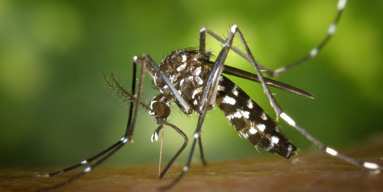 malaria, walka z malarią, leki, komary, komary malaria, Atowakwon