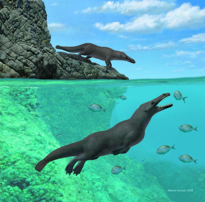 wieloryby, historia wielorybów, przodkowie wielorybów, Peregocetus pacificus