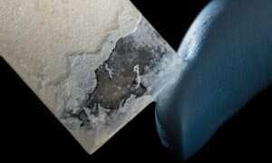 Te bakterie produkują masę perłową